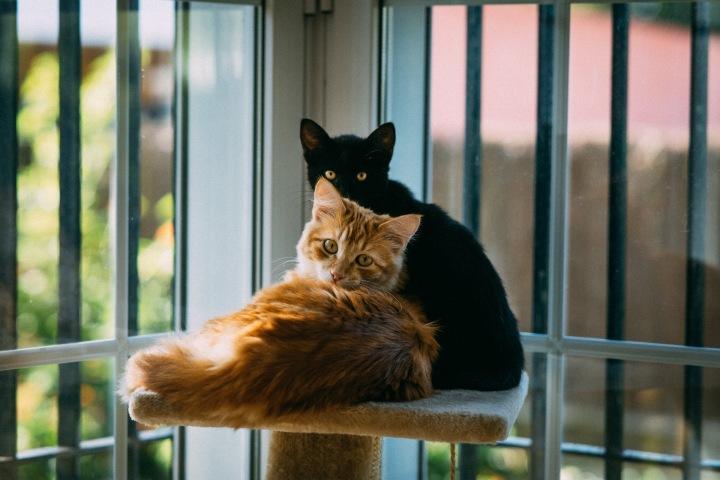 Wszystkie koty naszesą